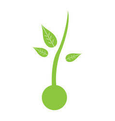 isolated plant silhouette vector image