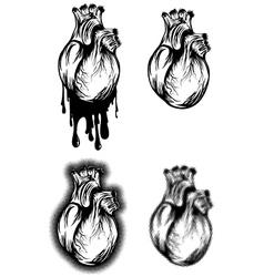 human heart set vector image vector image