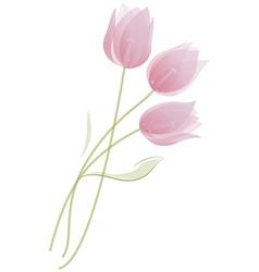 Bouquet of tulips vector