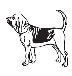 decorative portrait of bloodhound dog vector image