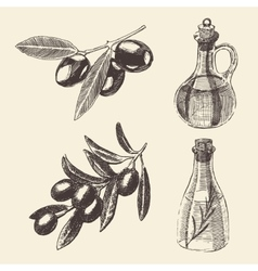 Olive Branch Bottle Set Hand Drawn vector