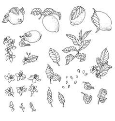 set with lemon plant vector image