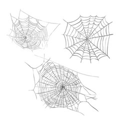 Spiderweb sketch vector