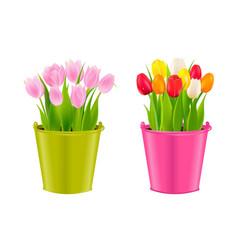 Tulips in pots vector
