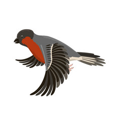 Bullfinch colorful nature winter flying bird vector