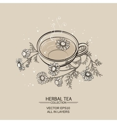 Cup of camomile tea vector