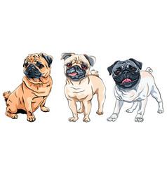 Set cute dog pug breed vector