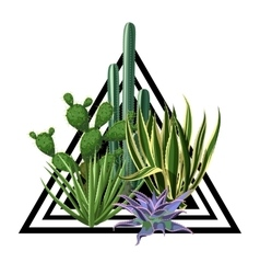 Print with cactuses and succulents set Plants of vector image vector image