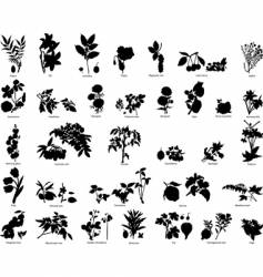 berries and flowers silhouettes vector image vector image