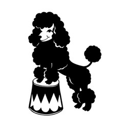 Decorative dog poodle black and white vector