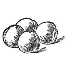 Four peach vintage vector