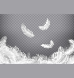 white feather background closeup bird or angel vector image