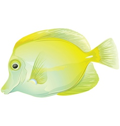 Yellow tang vector