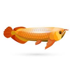 Arowana freshwater bony fish known as bonytongues vector