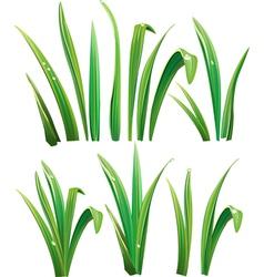 Green grass on white vector