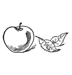 One apple vintage vector