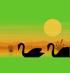 Silhouette of swan at sunrise beauty scenery vector