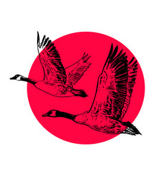 two wild geese on a red sun background sketch vector image