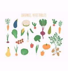 vegetable set in garden banner organic vector image