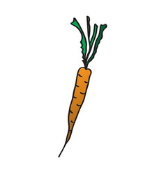 cartoon carrots drawing by vector image