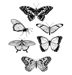 beautiful stylized butterfly outline silhouettes vector image
