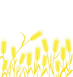 Corn background vector