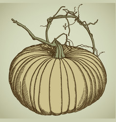 Freehand drawing of an orange pumpkin with leaves vector