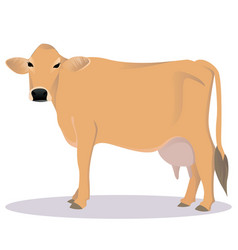 Jersey cattle vector