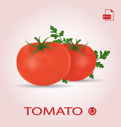Set of two fresh ripe tomatos with leaves vector