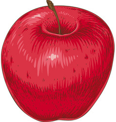 ripe red apple vector image vector image
