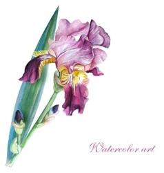 Pink iris watercolor vector