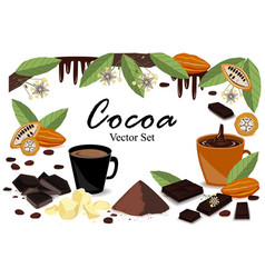 banner with super food cocoa collection pod beans vector image