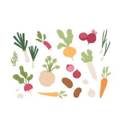 fresh organic root vegetables set healthy farm vector image
