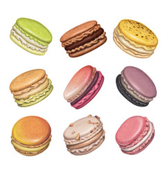 sweet delicious french macarons vector image