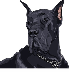 black dog Great Dane breed vector image vector image