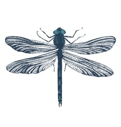 Hand drawn dragonfly vector image vector image