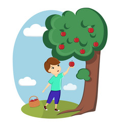 a boy collects apples from a tree nature village vector image