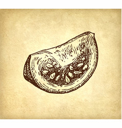 ink sketch of tomatoes vector image