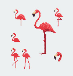 pink flamingo icons set pixel art style vector image