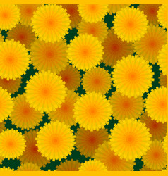 daisies flower seamless pattern vector image