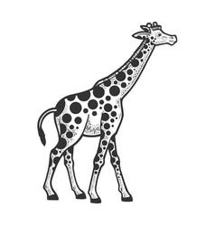 giraffe circles spots sketch vector image