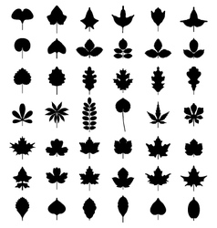 Leaves of trees vector