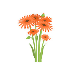 Plenty orange gerberas growing in flowerbed on vector