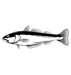 pollock fish vector image