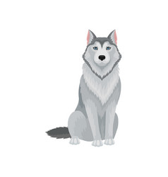Portrait of sitting siberian husky front view vector