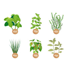 spice set closeup plants vector image