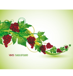 Red grapes vector