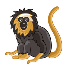 Golden-headed lion tamarin isolated wild ape vector