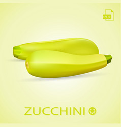 set of fresh ripe zucchini isolated on a vector image