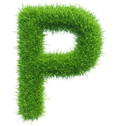 capital letter p from grass on white vector image